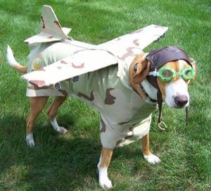 dogpilot